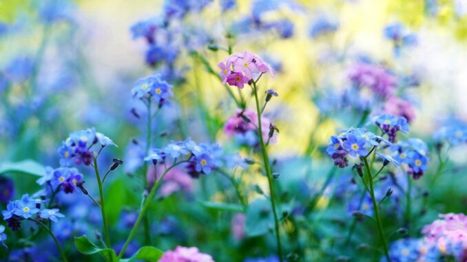 Zahrada poměnky